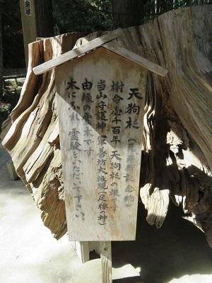 IMG_4887 天狗杉