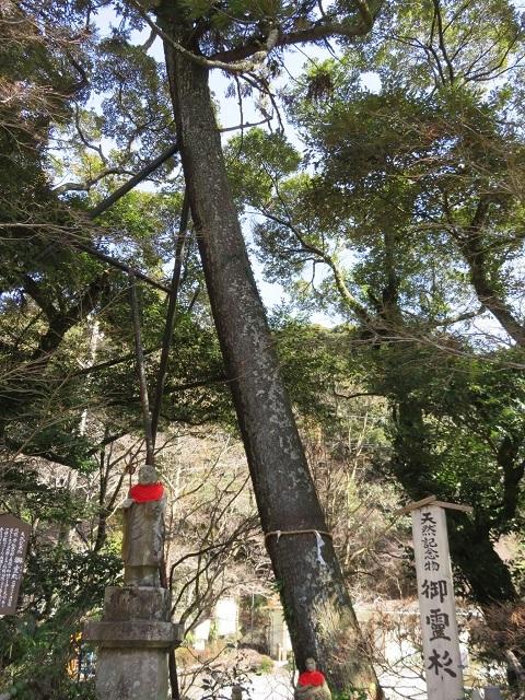 IMG_4874 御霊杉