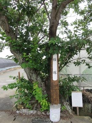 IMG_0568 桜塚
