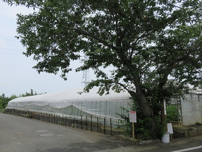 IMG_0569 桜塚
