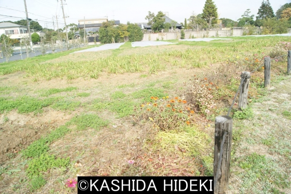 立ち退いた家々の跡地は臨時公園に。篠崎地区。