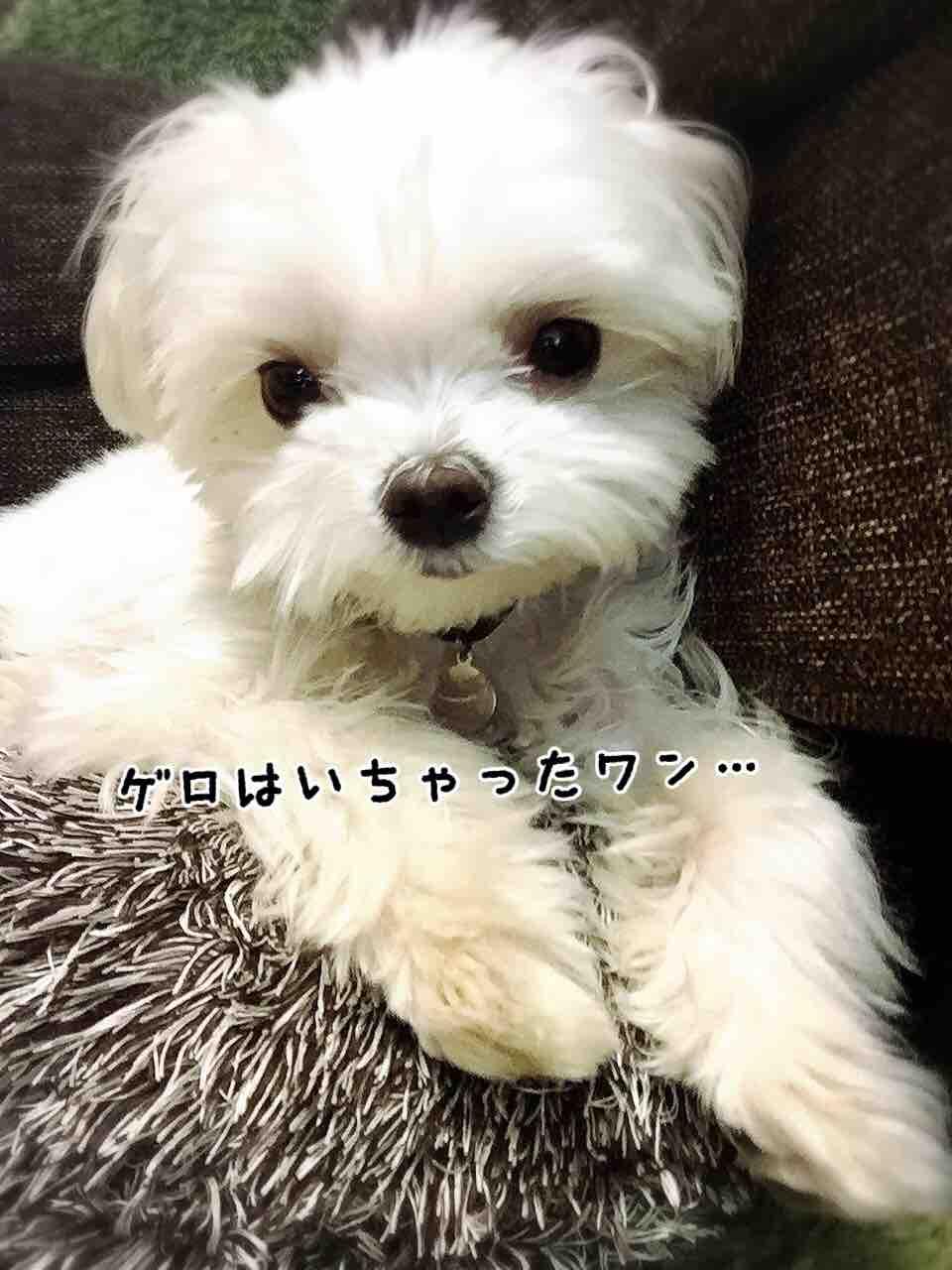 fc2blog_20170509204851b86.jpg