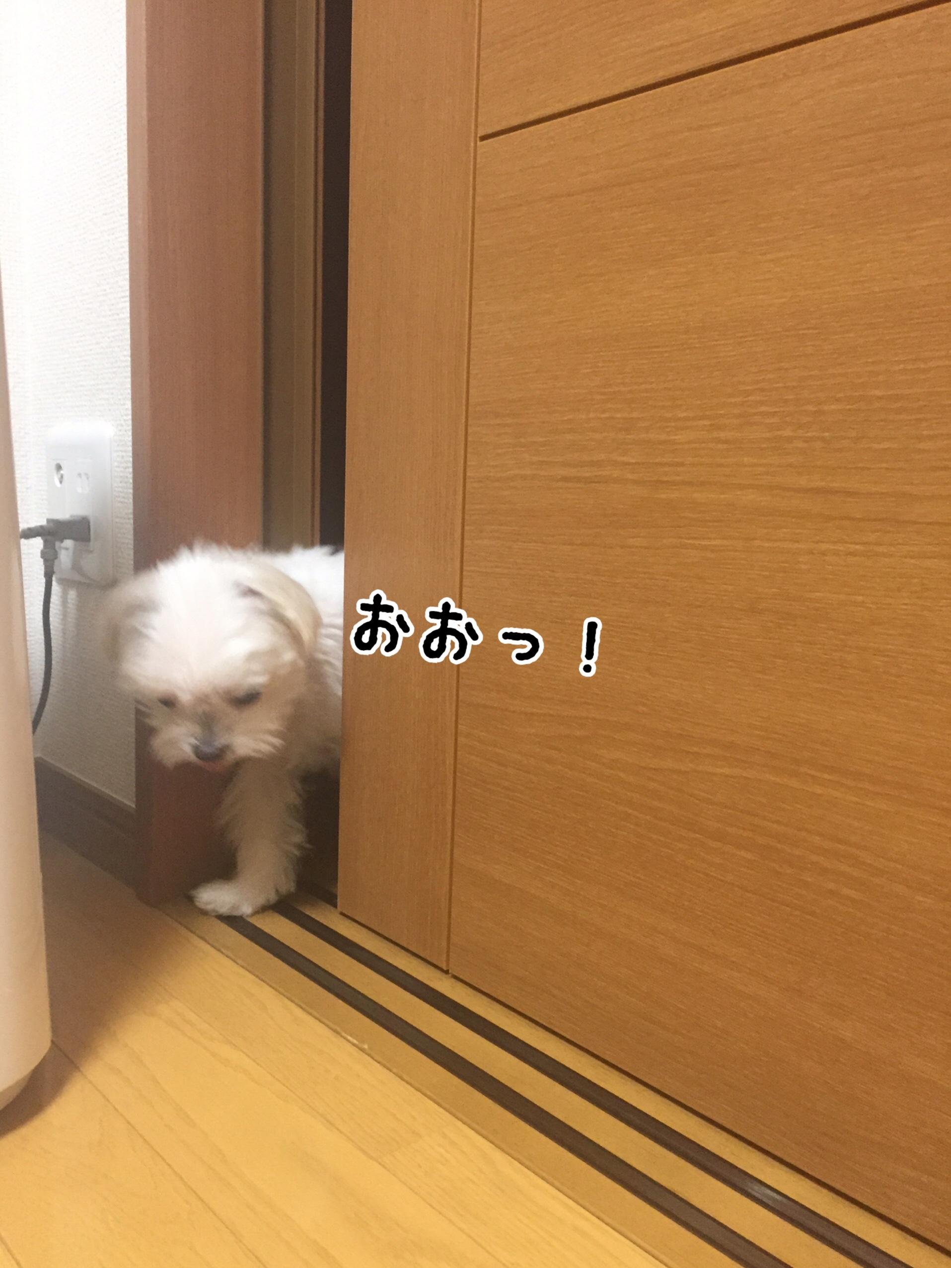 fc2blog_20170511234139aa5.jpg