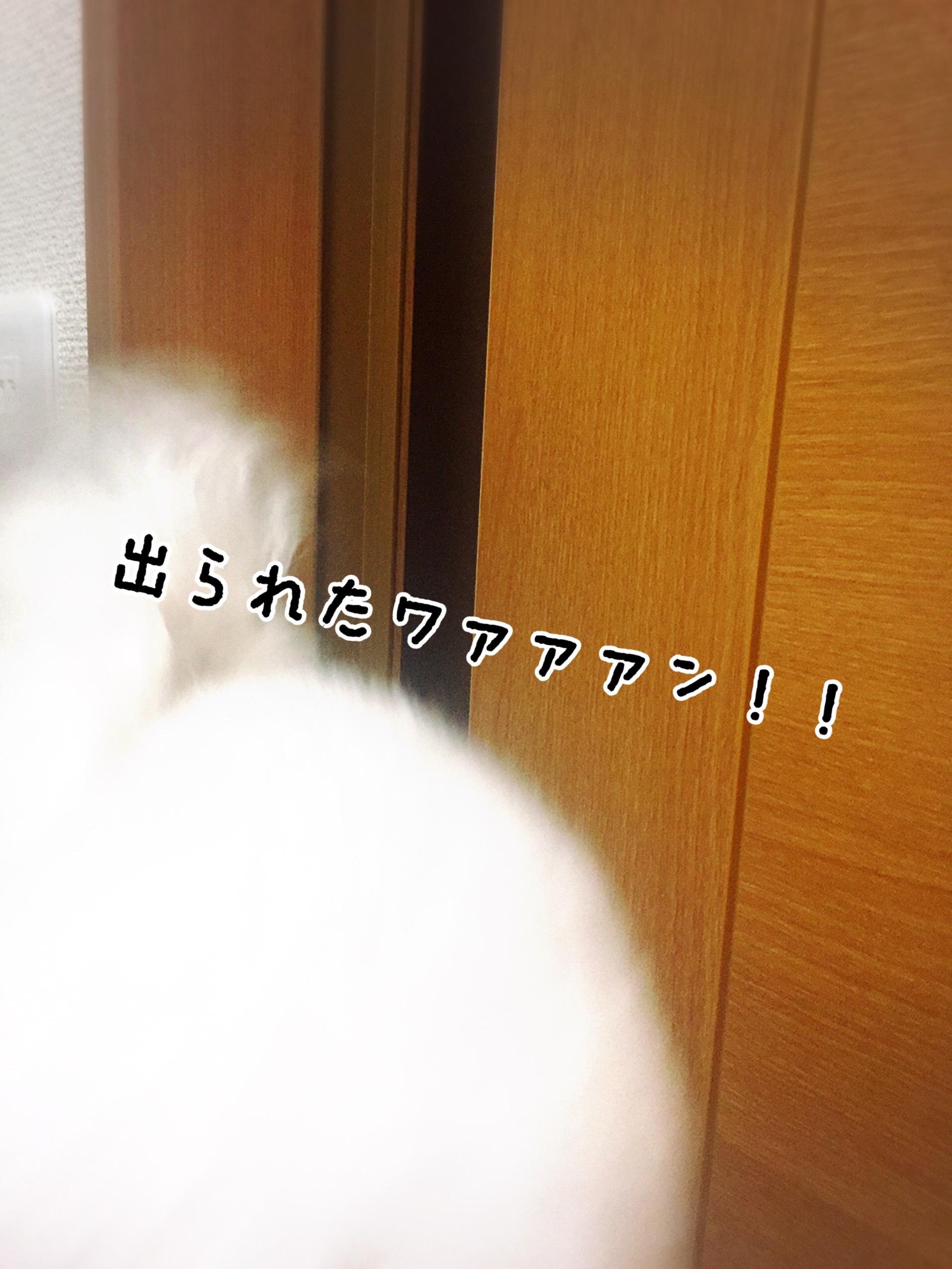fc2blog_2017051123415077a.jpg