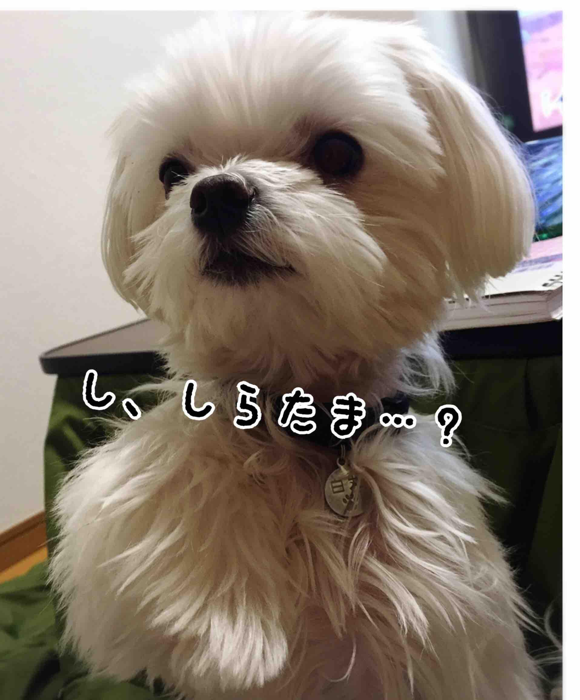 fc2blog_20170522214128b47.jpg
