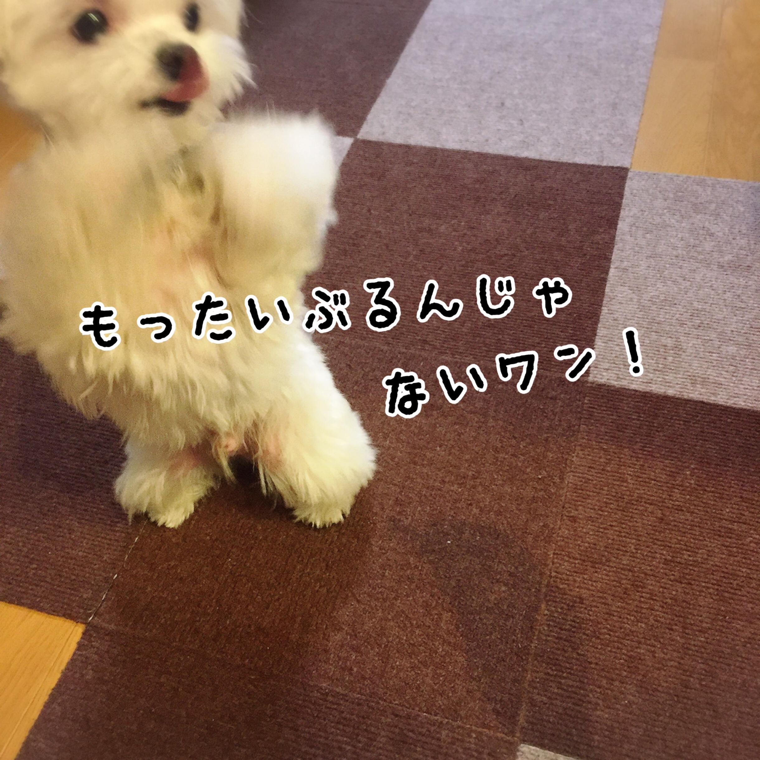 fc2blog_20170607203829db5.jpg