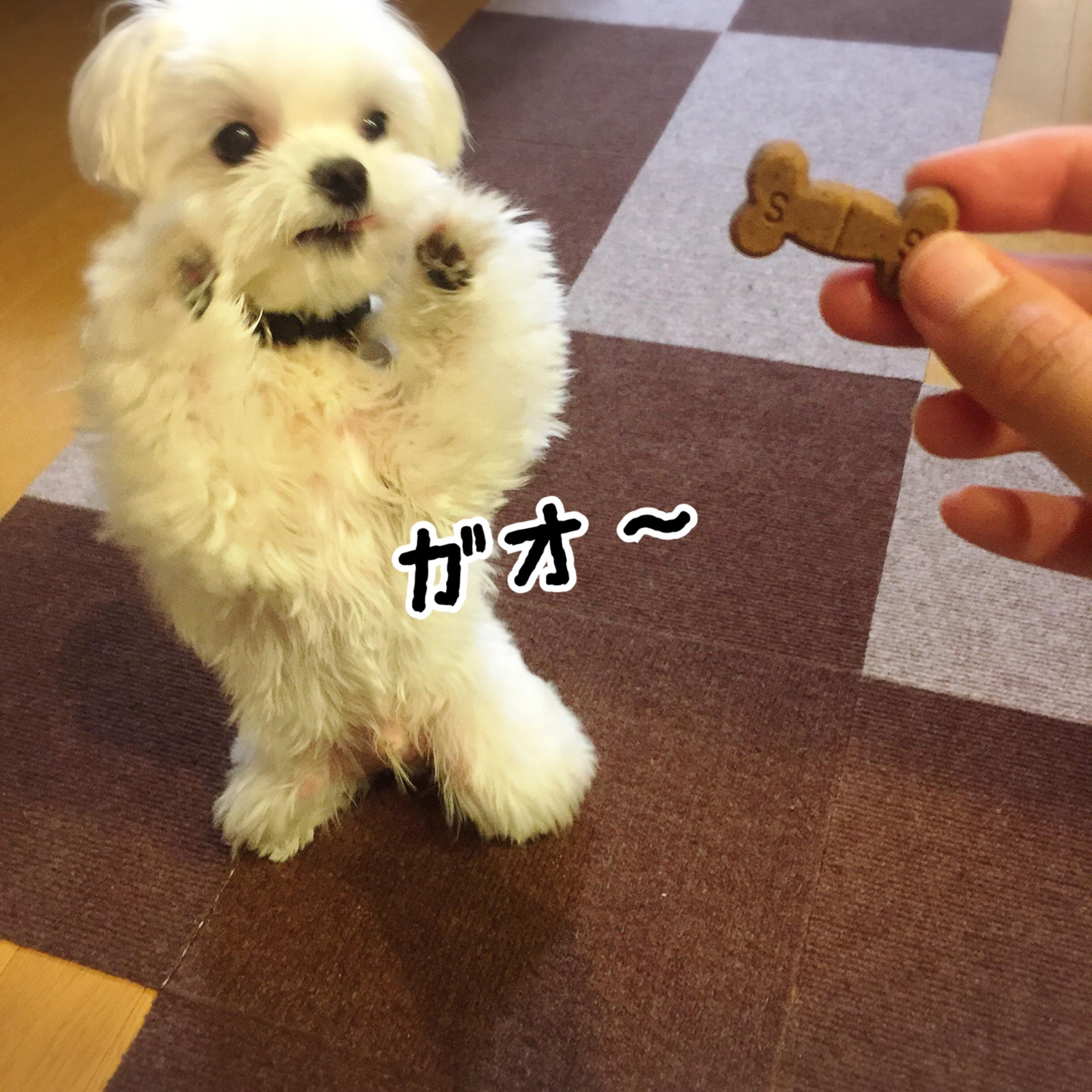 fc2blog_20170607203836751.jpg