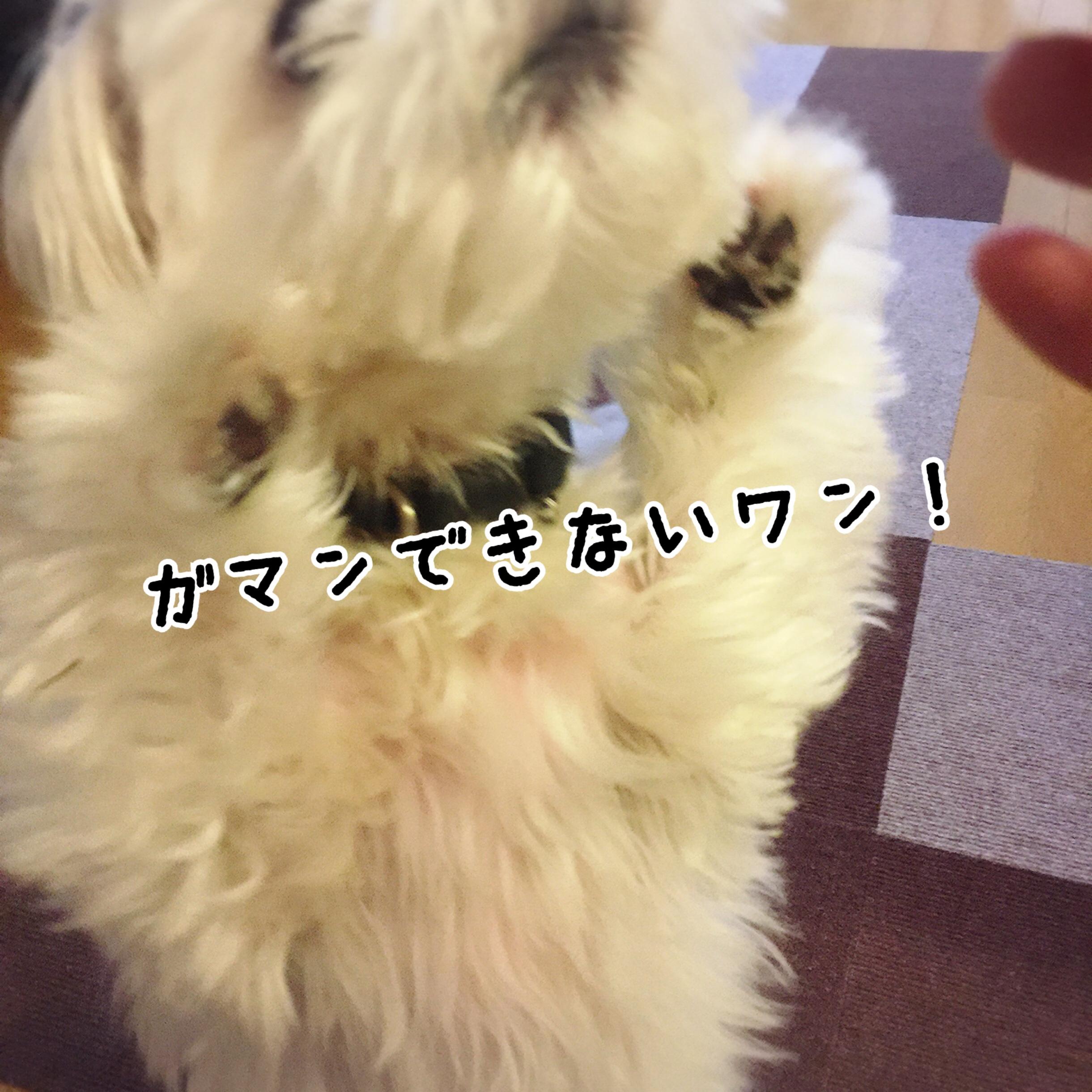 fc2blog_20170607203904bfa.jpg