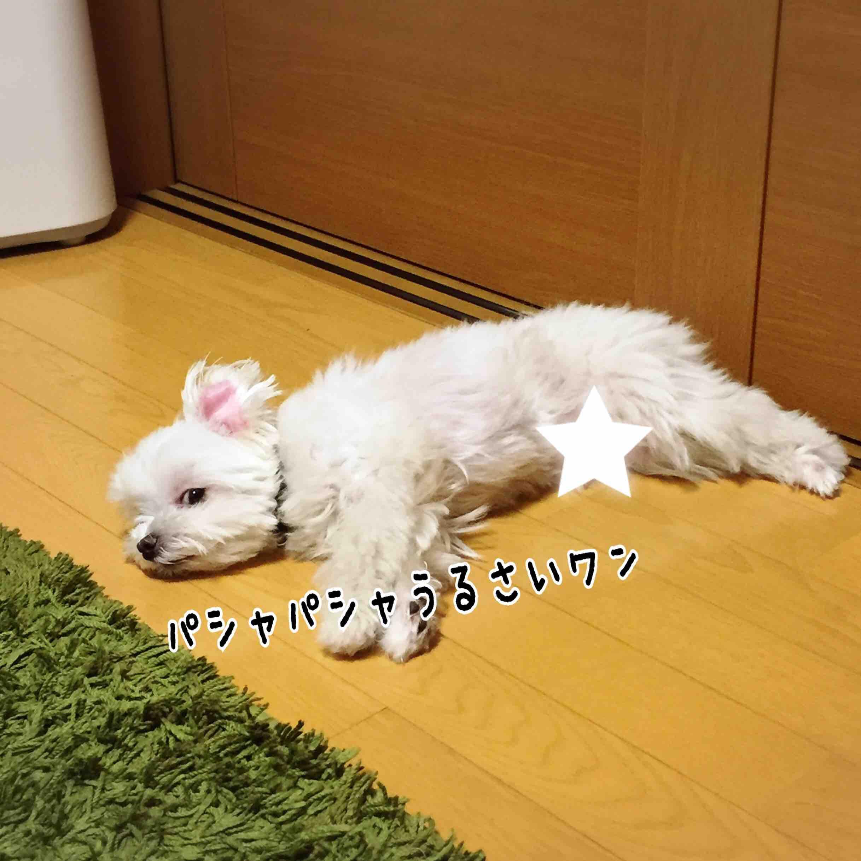 fc2blog_20170719154104c1d.jpg