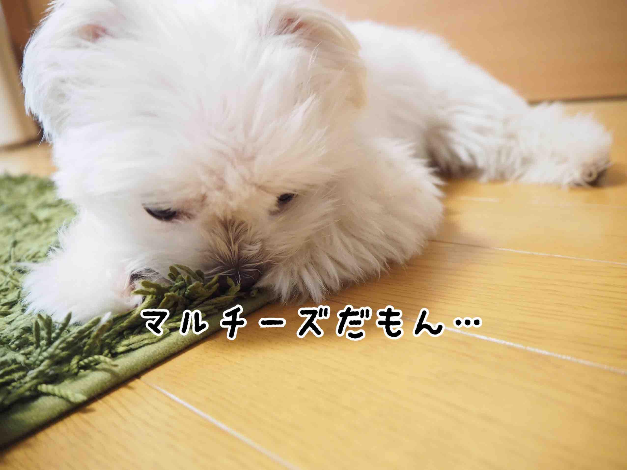 fc2blog_2017072521210984f.jpg