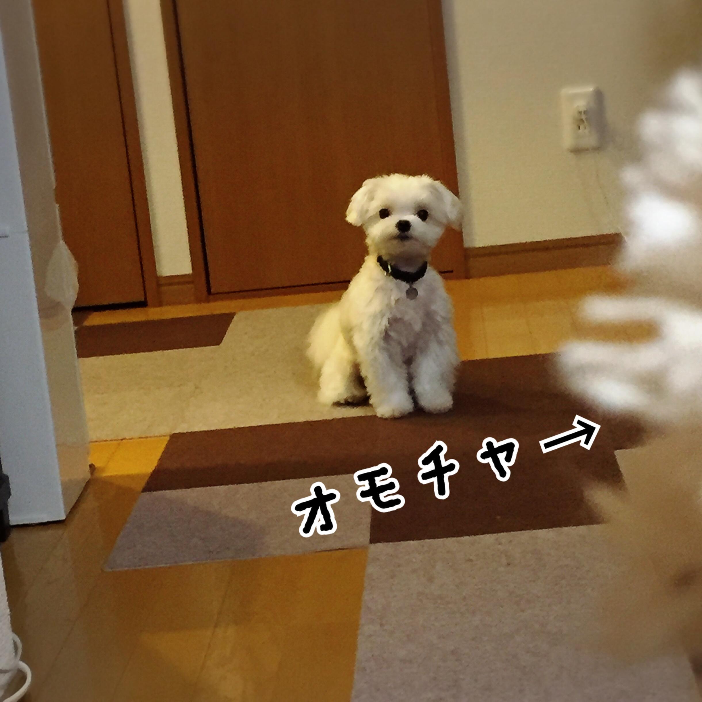 fc2blog_20170802184046753.jpg