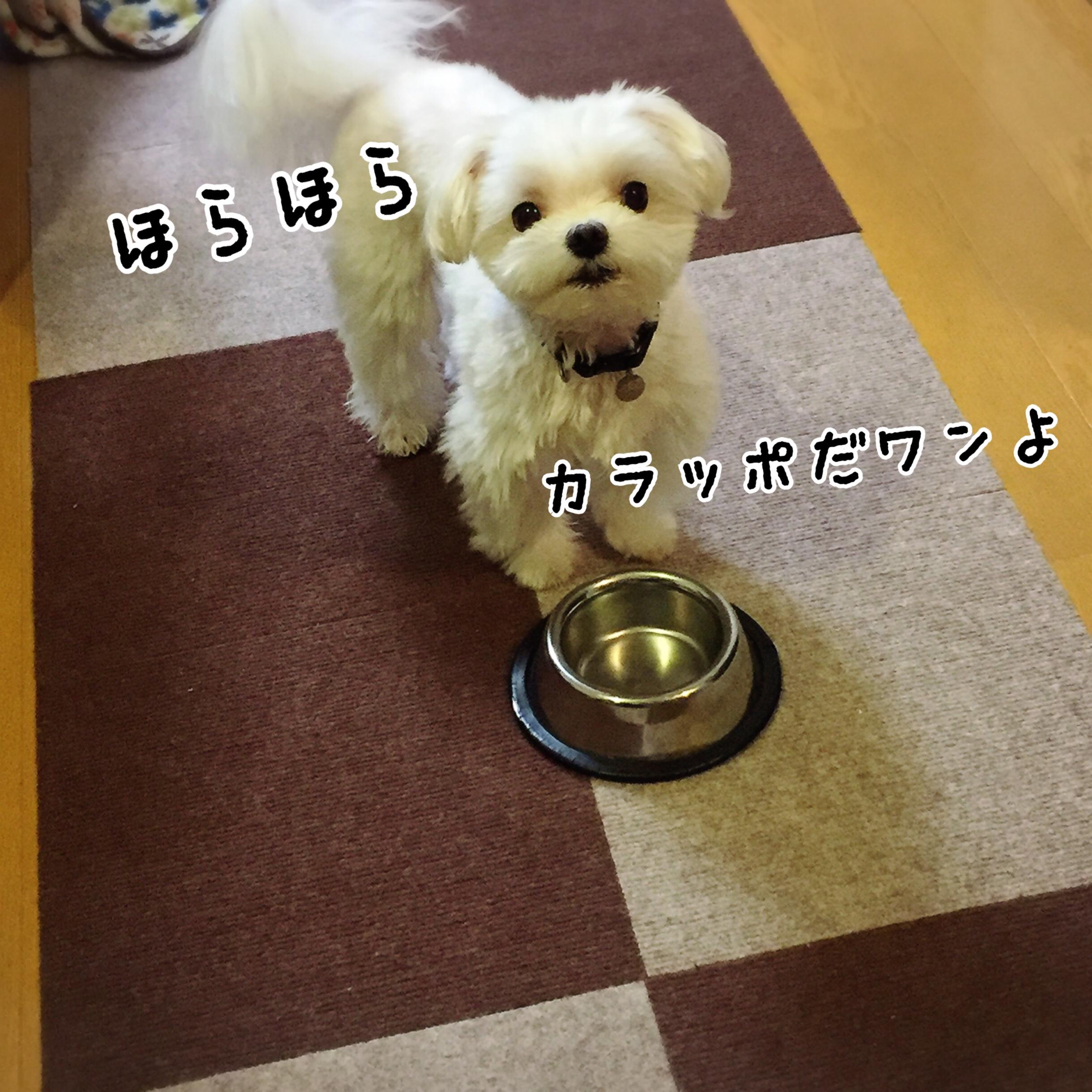 fc2blog_201708032036028be.jpg