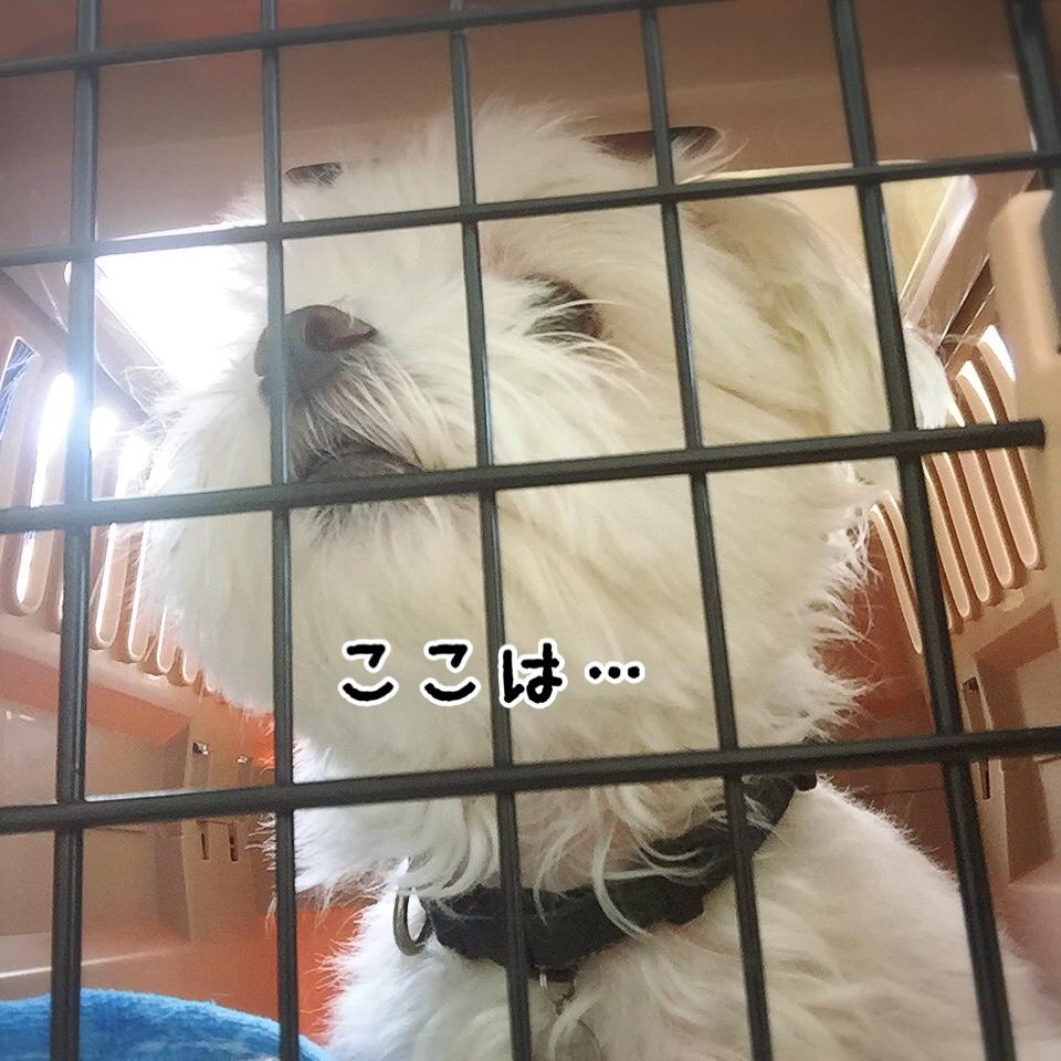 fc2blog_20170830113751276.jpg