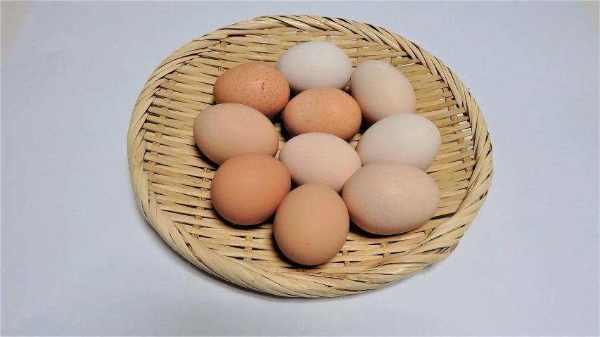 ランクルさんから頂いたシャモの有精卵10個