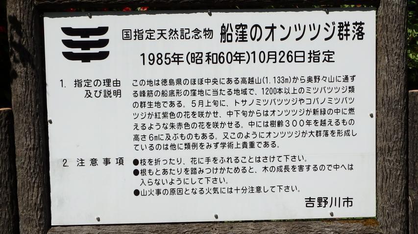 船窪オンツツジ群落の説明看板
