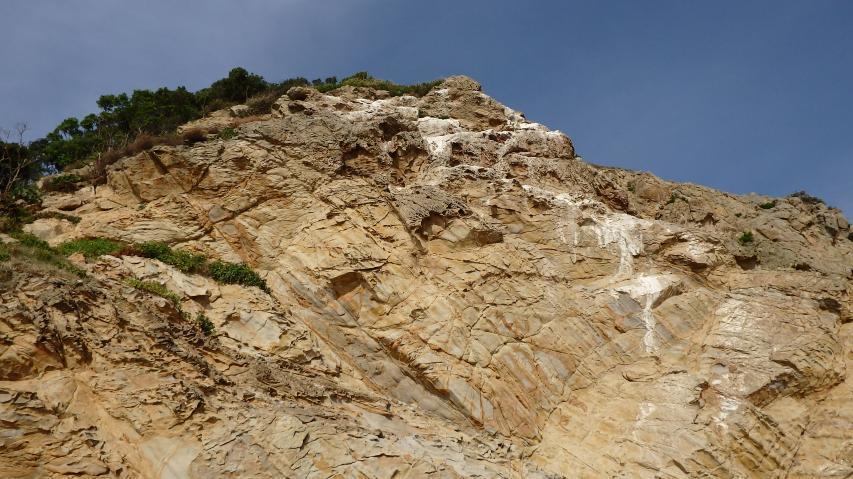 断崖絶壁の上で営巣する鳥は何?