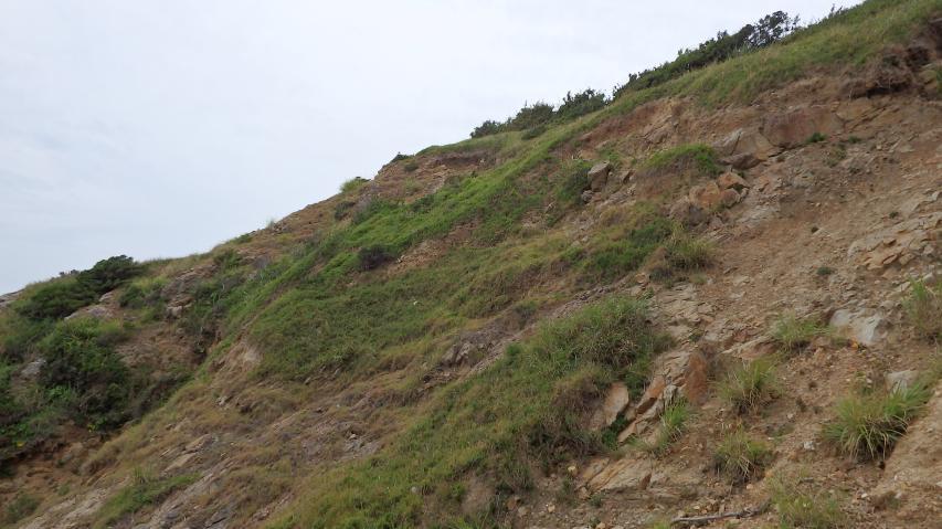 崖の上も植生は亜高山帯の風衝地みたい