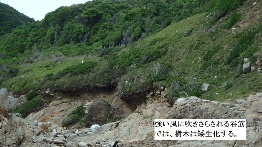 谷筋では強風のため樹木は矮生化する