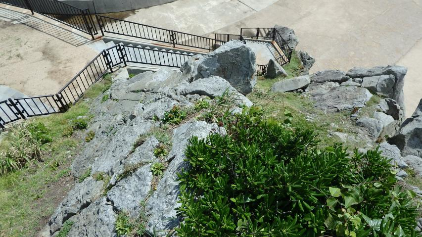 海岸岩場の植物観察場所