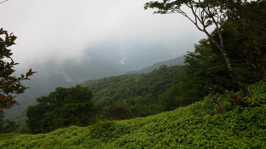 木屋平村側の谷
