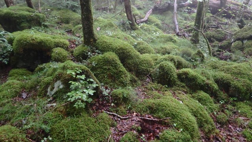 山犬嶽 水苔の名所