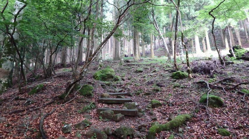 登山道はよく整備されています