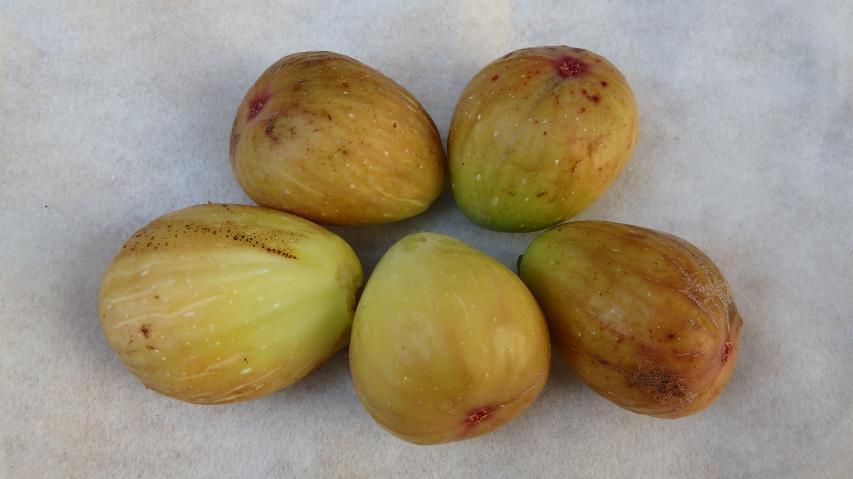 蓬莱柿の果実
