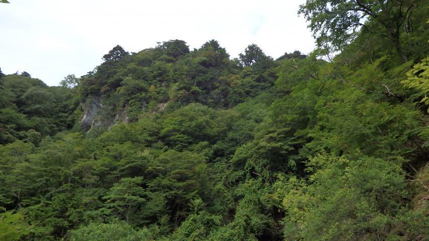 断崖絶壁にも鬱蒼とした森林