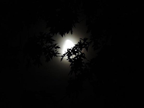 フリー画像・闇の底から見える木々