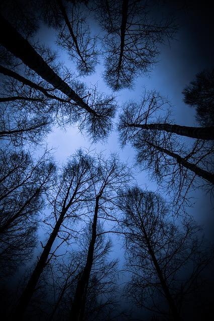 フリー画像・見上げる青い木々