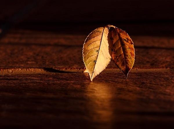 フリー画像・光る木の葉