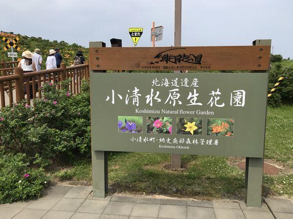 7,1小清水原生花園ー1