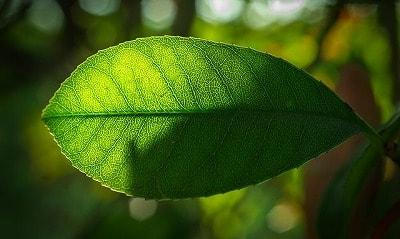 s-leaf-2234669_400-min.jpg