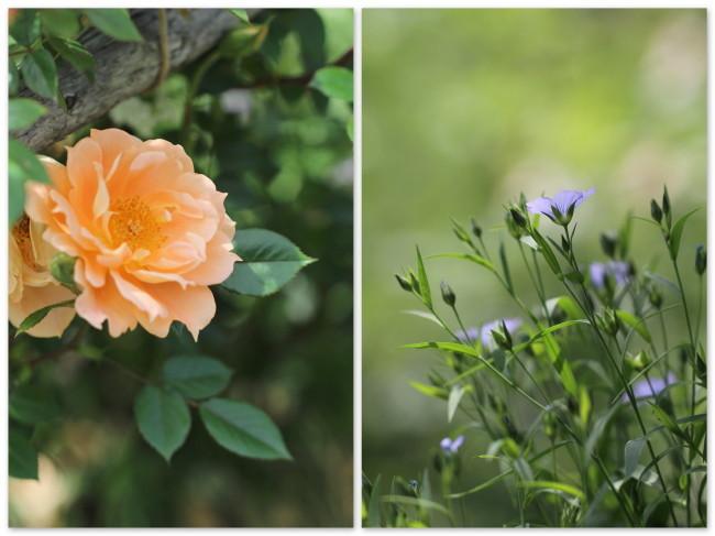 モデル仕様、小さな花