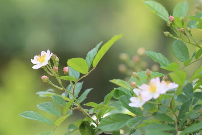 小花かわいい