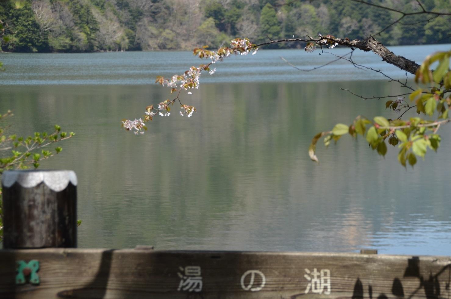 DSC_0119湯の湖と桜