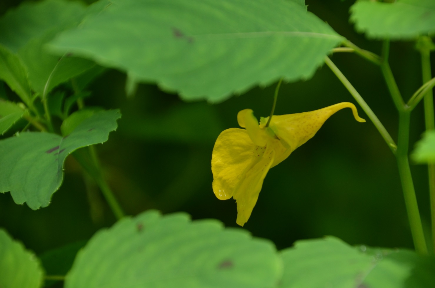 DSC_0112黄色いつりふね