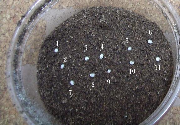 採卵3日目