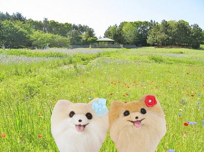 お花畑です