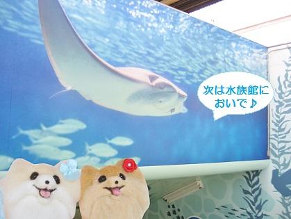 次は水族館においで