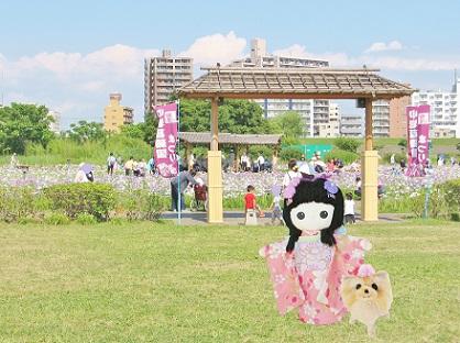 小岩菖蒲園です