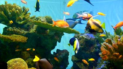 紅海の熱帯魚