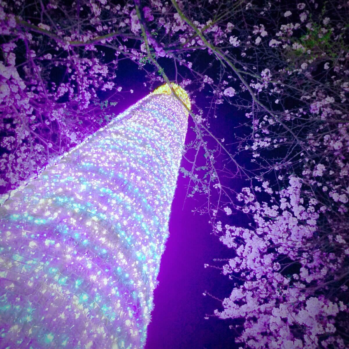 時之栖 桜1