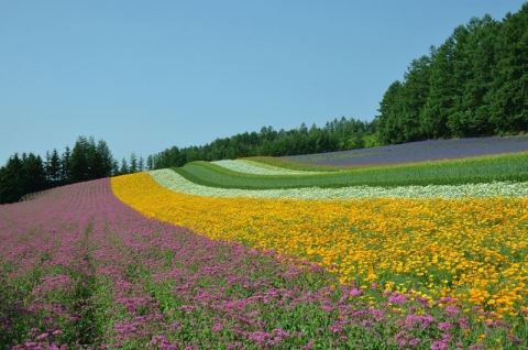 彩りの畑(ファーム富田)
