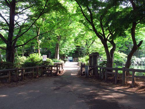 井の頭恩賜公園11
