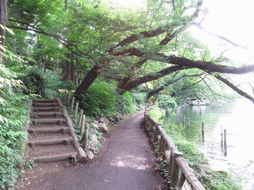 井の頭恩賜公園17