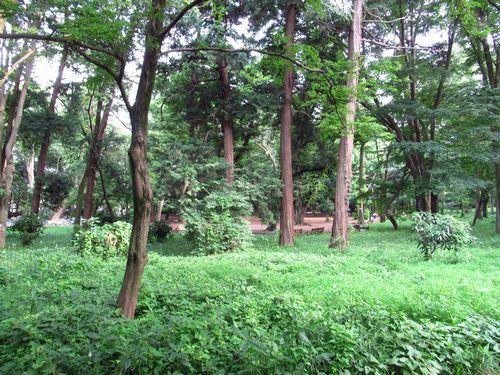 井の頭恩賜公園38