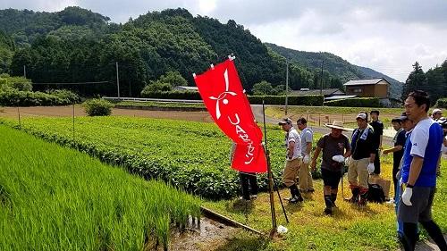 <佐野藍復活プロジェクト>支援活動へ!⑦
