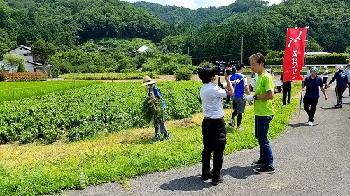 <佐野藍復活プロジェクト>支援活動へ!⑩