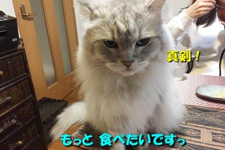 毛ガニ初体験6